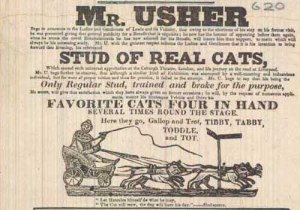 Mr Usher and his stud of performing cats