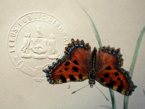 butterflies02