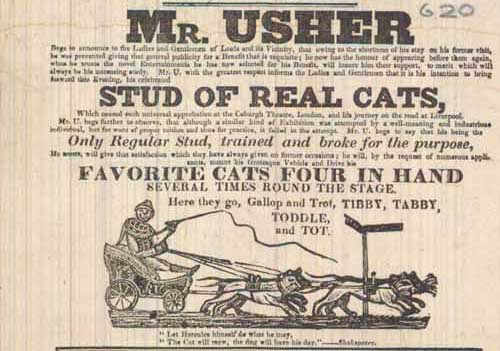 Mr Usher and his Stud of Real Cats