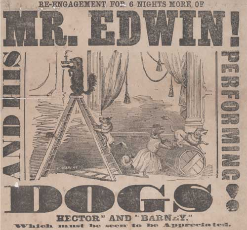 Mr Edwin and his performing dogs