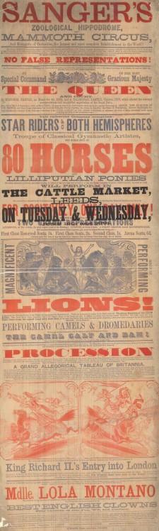 cattle market 3